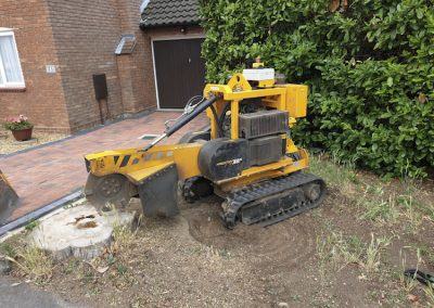 Tree Stump Removal in Kent – Stump Grinding